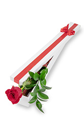 Long Stem Single Rose Presentation Box